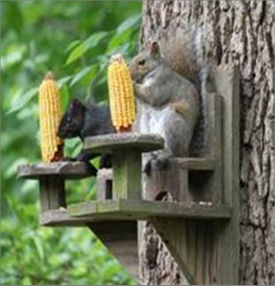 Écureuils Au Resto